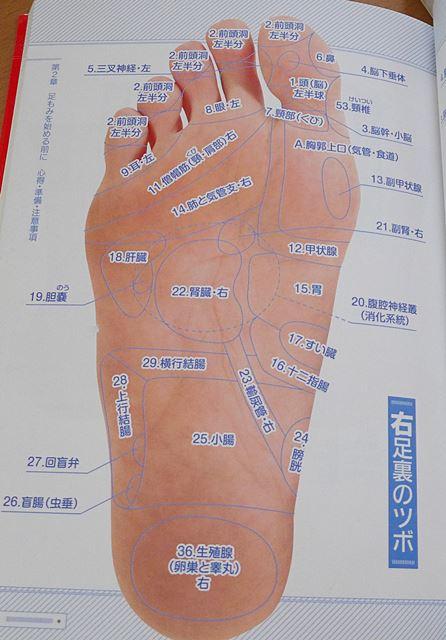 官足法足の裏の反射区(つぼ)